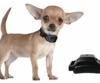 Blafband kleine hond